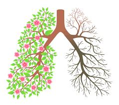 Nguyên nhân COPD và cách phòng ngừa